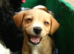 smilingdog1