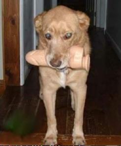 dog with vibrator