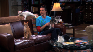 sheldon and cats