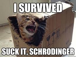 schrodingers cat meme